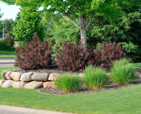 landscaping trees and shrubs